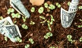 Dollar Bills Growing Our Of Organic Earth With Sprouts Conceptual Financial And Banking Growing Your poster