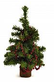 picture of gilf  - One green christmas tree and red garland - JPG