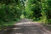Road In Forest Nature. Green Forest Road. Nature. Road. Natural Environment. Forest Nature. Road In  poster