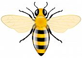 stock photo of bee cartoon  - Honey Bee - JPG