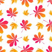 Leaves Of Maple And Chestnut. Autumnal Seamless Pattern. poster