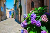 Street in Rimini with blooming flowers hydrangea near house, ancient city center. Vacation in beauti poster