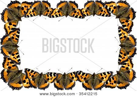 Butterfly Frame On White Background