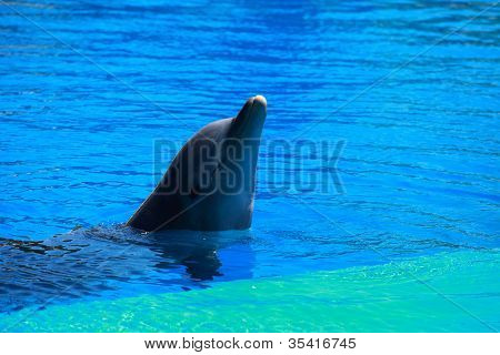 Dolphins Playing In Formation In The Pool