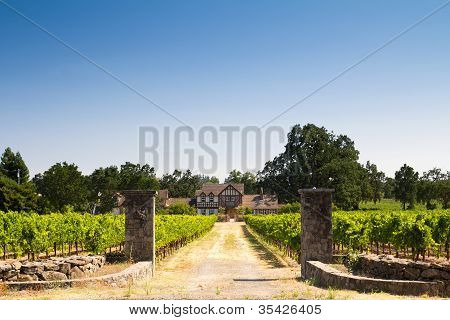 Beautiful House In A Vineyard