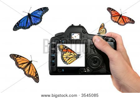 Photographer Shooting Butterflies In The Air