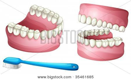 ilustração de escova de prótese e o dente em um fundo branco