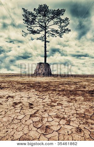The last tree. Dried cracked mud on the foreground