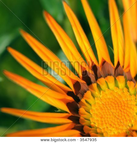Orange Daisy Detail