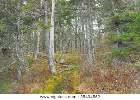 Forest On Top Of A Cliff