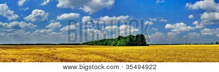 Cloudy Sky And Wheat Field.