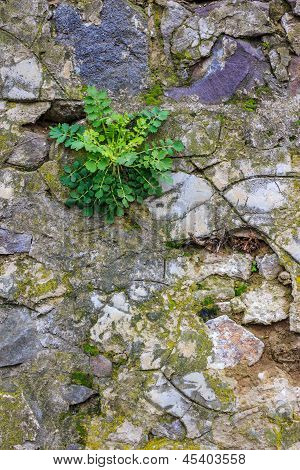 Green Plant on A Stone Wall