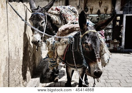Saddled Donkeys