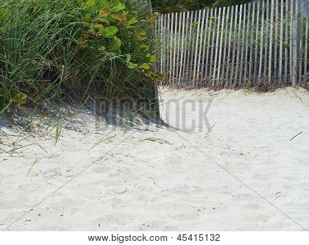 sandy beach path