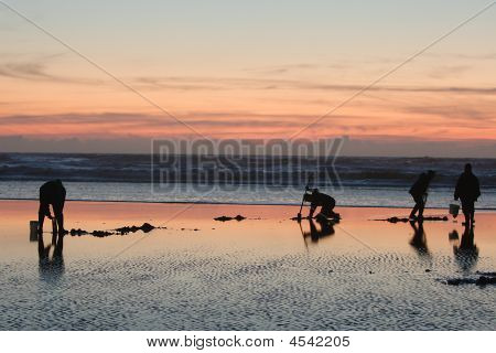 Clam Digging On A Sand Bar