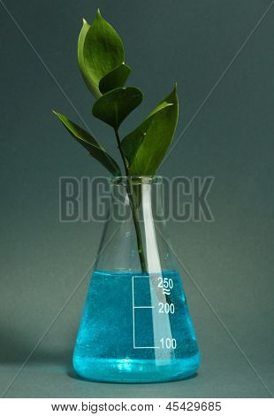 branch with green leaves in test-tube on grey background