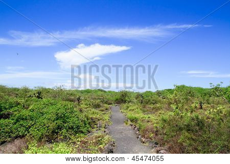 View of the walking tourist trail in the Galapagos