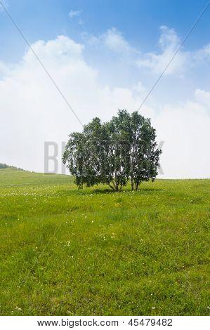 Solitary Tree On Grassy