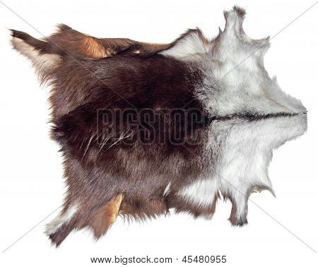Chamois Leather
