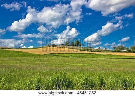 Green nature sceenery under blue sky