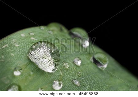 Leaf water drops isolated on black background