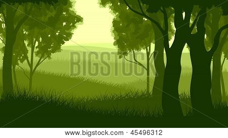 Horizontal Illustration Within Forest.