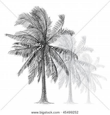 Coconut Tree - Hand Drawn