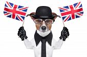 image of bowler  - british dog with black bowler hat and black suit waving flags - JPG