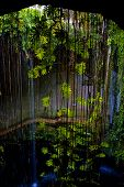 stock photo of cenote  - cenote ill kill mexico the plant and the water in the hole - JPG