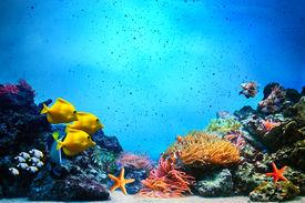 image of aquatic animals  - Underwater scene - JPG