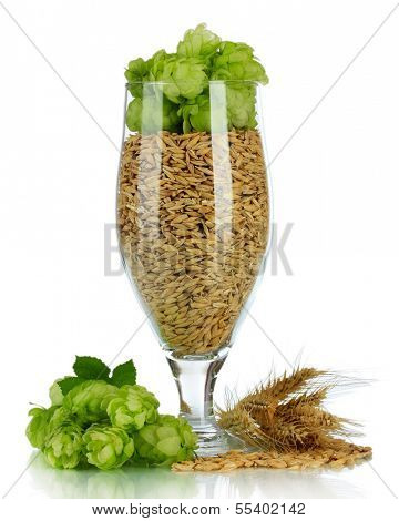 Glass of fresh green hops and barley, isolated on white