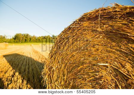 Hay Bales On A Field.