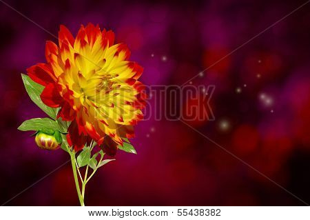 Dahlia Autumn Flower