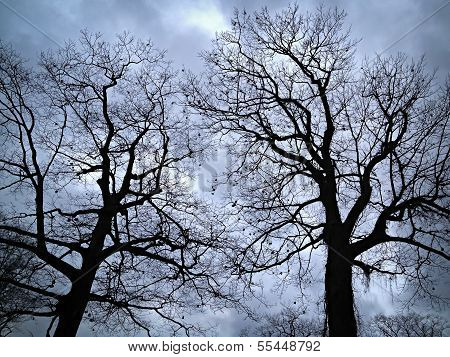Leafless Trees Against Evening Sky