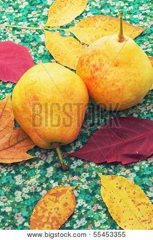 big,delicious pear