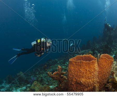 St. Lucia Diver And Sponge