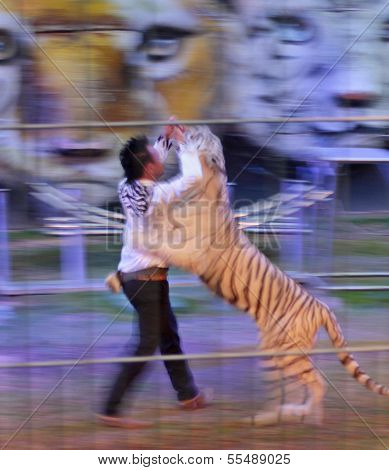Chiang Mai, Thailand - December 12, 2013 , Tiger Show At Chiang Mai Night Safari
