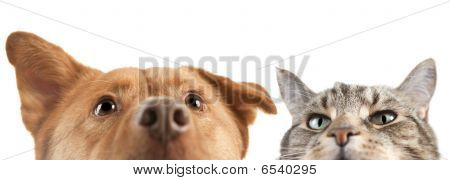 Dog And Cat Up And Close On The Camera