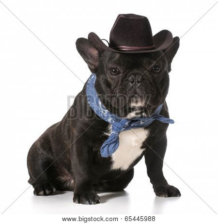 french bulldog wearing western hat and bandanna