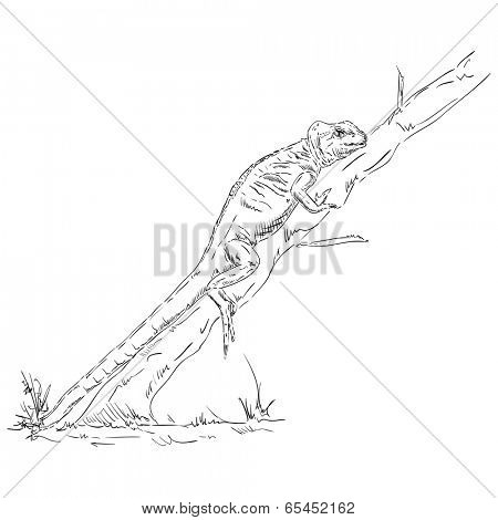 chameleon lizard climbs up tree - isolated on background