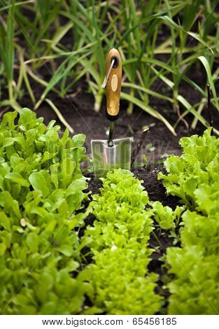 Photo Of Salad Bed With Small Garden Shovel