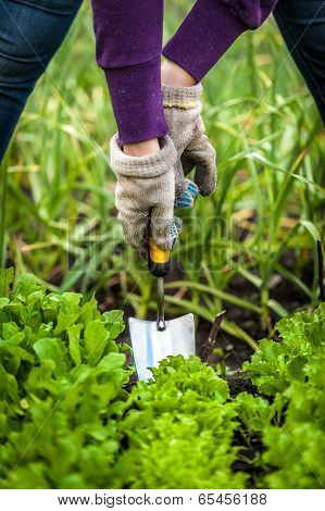 Woman In Gloves Working With Small Shovel On Garden Bed