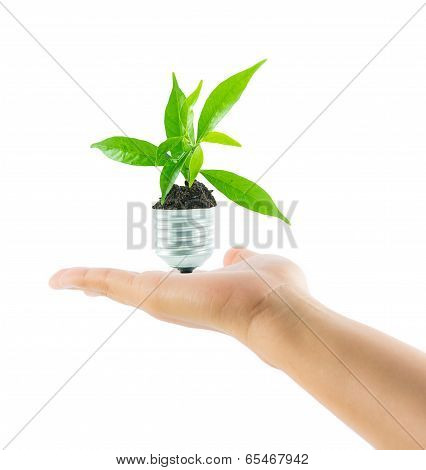 Hands Holding Lamp Light Bulb New Life Plant