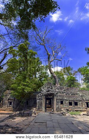 Prasat Ta Prum Old Trees.