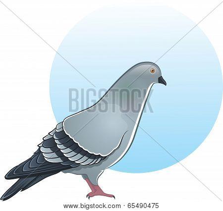 Cute vector pigeon illustration