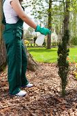 stock photo of spayed  - Woman spaying plants in her garden vertical - JPG