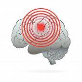 image of hemisphere  - The image of the  Human Brain Hemisphere - JPG