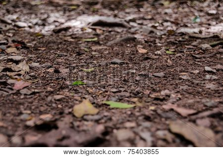 Trail Dirt Background