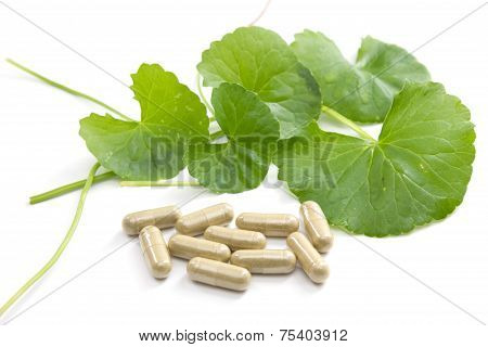 Herbal Medicine From Centella Asiatica
