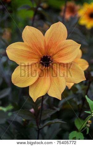 Yellow And Brown Flower